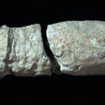 ดิลโด้ยุคหิน และเซ็กส์ทอยยุคโบราณ แบบที่เราไม่เคยเห็นมาก่อน