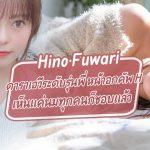 Hino Fuwari ดาราเอวีระดับรุ่นพี่ หน้าอกคัพ H เห็นแค่นมทุกคนก็ชอบแล้ว – MSFH-057